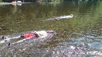 桂川で水浴び